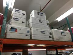Igloo cooler box