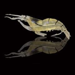 4cm Soft plastic shrimp lure (Pack of 10)