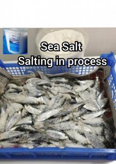 Tamban(Sardine)Freshly Cured bait