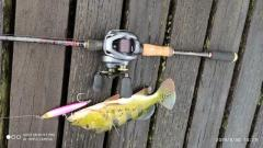 Sinking pencil lure