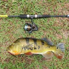 Dual Hooked Fly