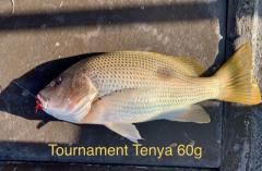 Tournament Tenya