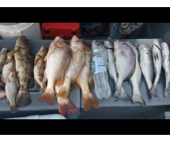 13th Feb Southern Night Fishing Saturday 13th Feb