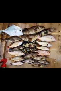 Fishing boat kaki