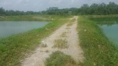 Fresh water earth ponds for production of ornamental or food fish