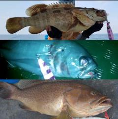 Open Season Sale Tested & Proven!!! Slow Best Jig (BJ). 150g to 600g. Read More In Descriptions.